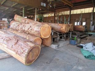 杉(スギ) 原木